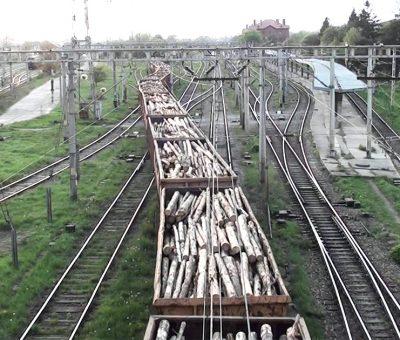 taieri-ilegale-de-lemn