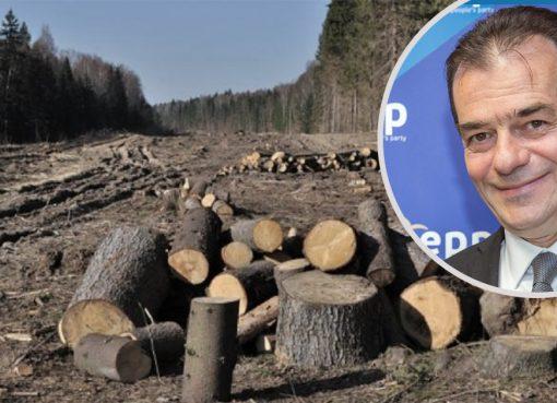 Ludovic-Orban-apără-tăierile-de-de-lemne-și-pe-Schweighofer